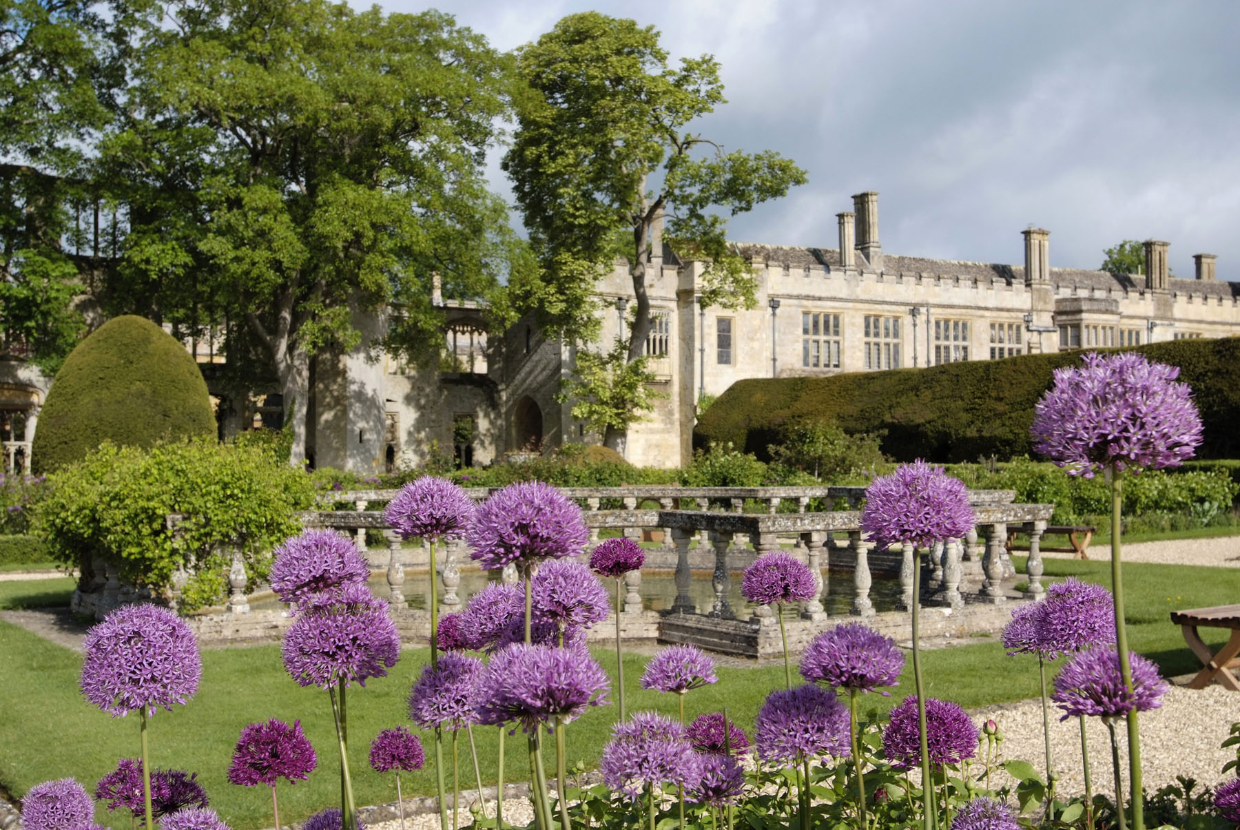 Cotswold gardens at Sudeley Castle looking through purple Allium heads