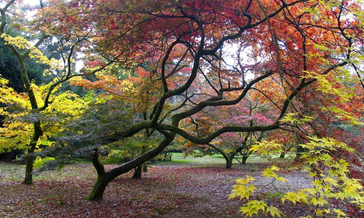 Westonbirt Arboretum, Tetbury