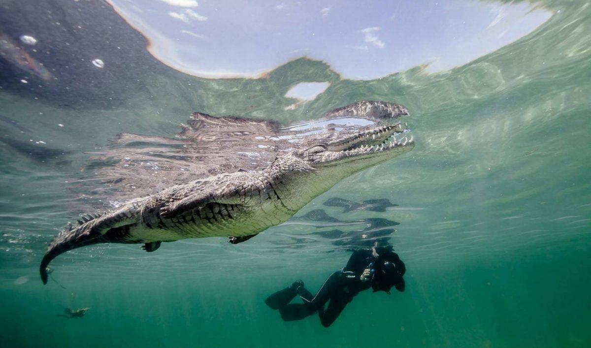 Crocodiles of the World