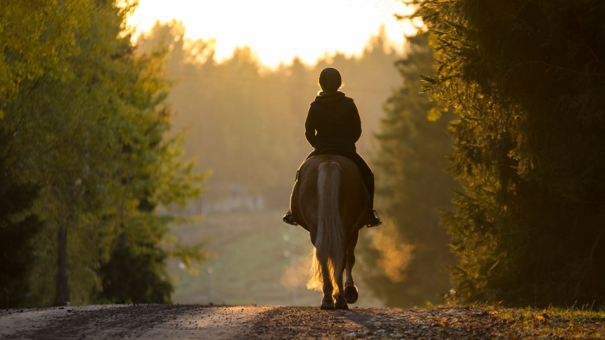 Cotswold Horse Tours